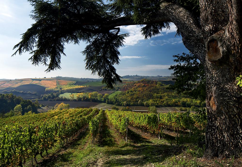 włoska winiarnia bricco dei guazzi